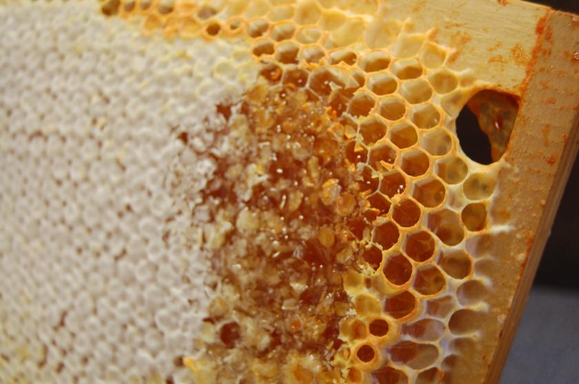 Tessellate pattern of honey bees